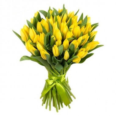 A58 YELLOW TULIPS