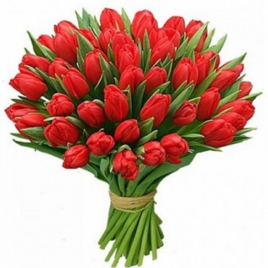 A53 Tulips 50st