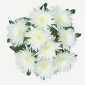 L7 WHITE CHRYSANTHEMUM