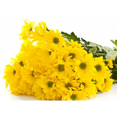 L11 YELLOW CHRYSANTHEMUM