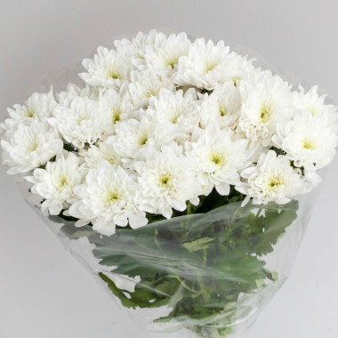 L10 WHITE CHRYSANTHEMUM